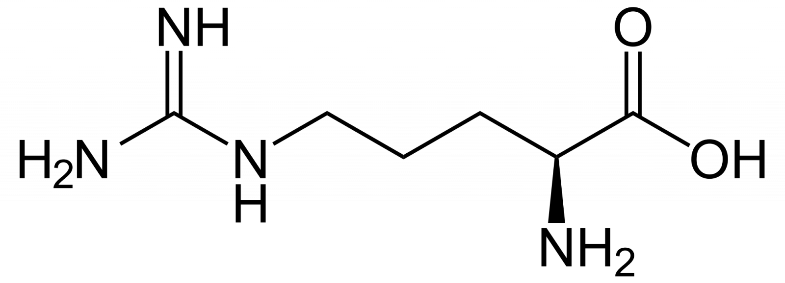 О действии цитруллина при дефиците белка