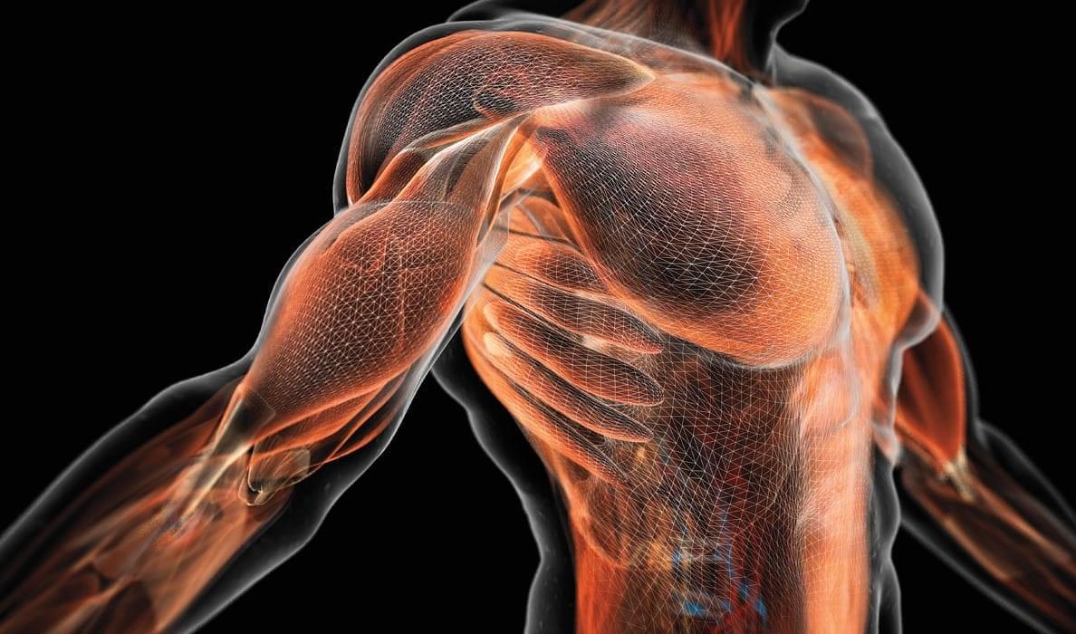 Добавки лизина повышают мышечную силу