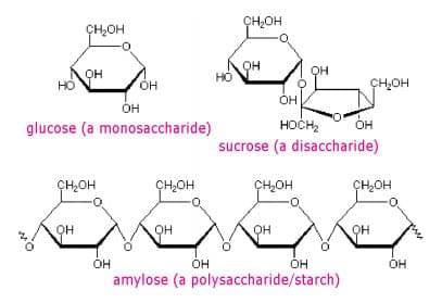 raschet-kolichestva-nutriento-10