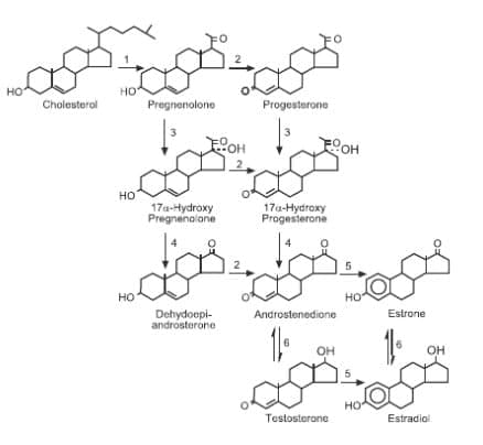 raschet-kolichestva-nutriento-3