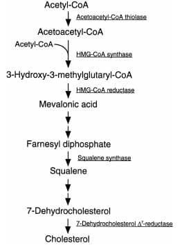 raschet-kolichestva-nutriento-3a