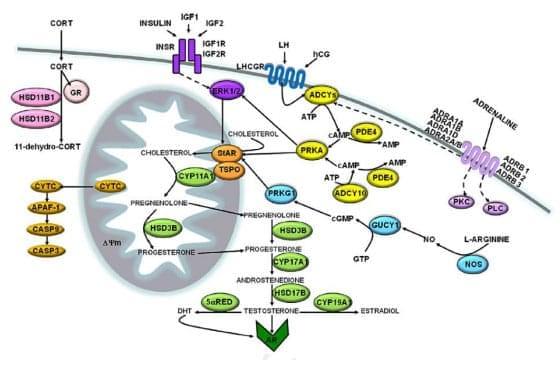 reproduktivnaya-sistema-muzhchiny-2