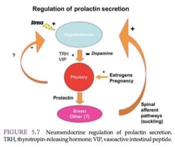 reproduktivnaya-sistema-muzhchiny-4