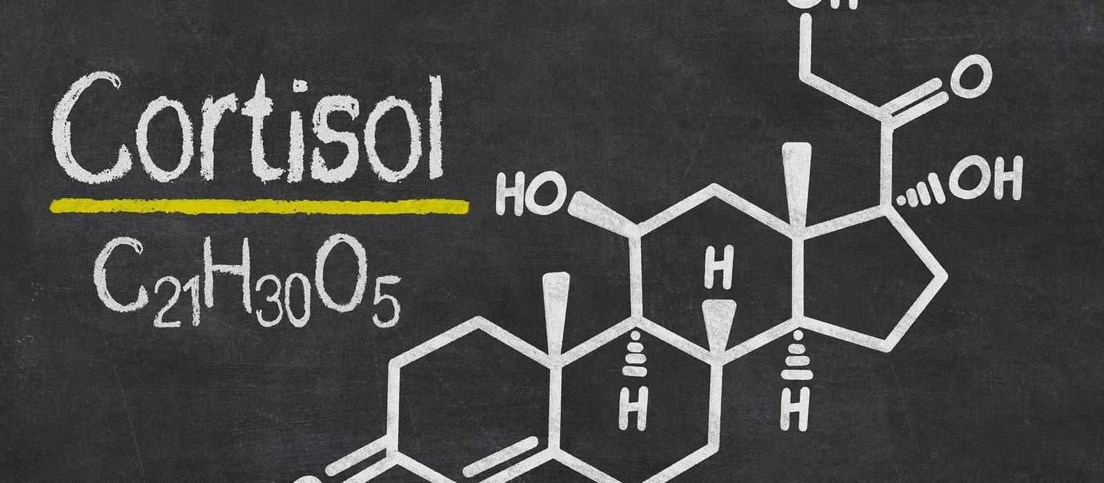 Слишком большой уровень кортизола в организме? Витамин Е может помочь